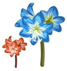 Blue and red flower closeup on white background vector
