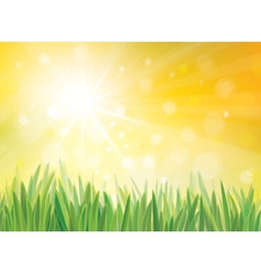 Sping sun grass vector