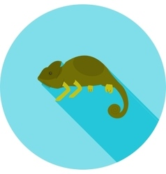 Pet chameleon vector
