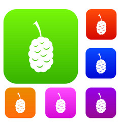 Fruit of mulberry set color collection vector