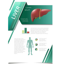Internal human organs infographic liver vector