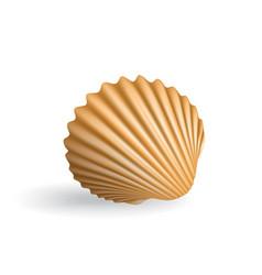 realistic seashell vector image