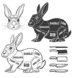 Rabbit butcher diagram design element for poster vector