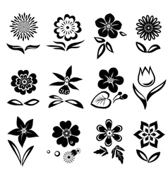 Flowers and leaves icons set nasturtium camomile vector