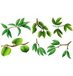 Different type of leaves on branch vector image