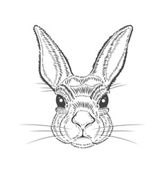 vintage graphic rabbit print vector image