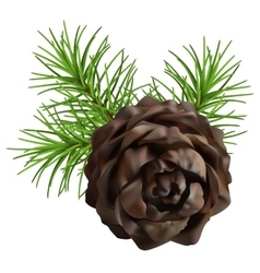 Christmas branch hanging pine cone vector