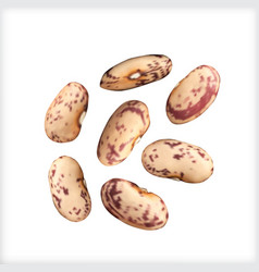 dry beans isolated vector image vector image