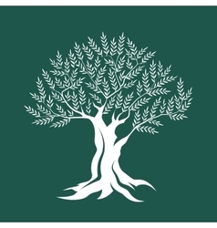 Olive tree silhouette on green background vector image vector image