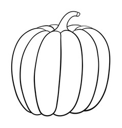 pumpkin vector image