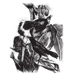 Crow blackbird vintage vector