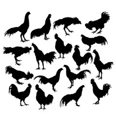 Silhouette of a variety of actions cock fighter vector image