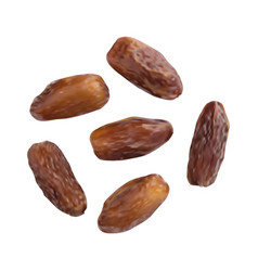 Dried dates isolated on white background vector