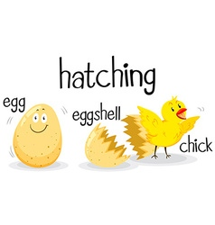 Little chick hatching from the egg vector image vector image