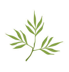 willow tree green branch vector image vector image