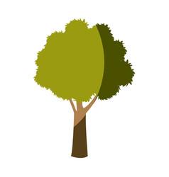 tree plant foliage botanic garden vector image