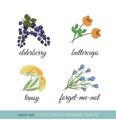 Collection of medicinal plants1 vector