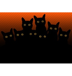 Cats in black orange vector