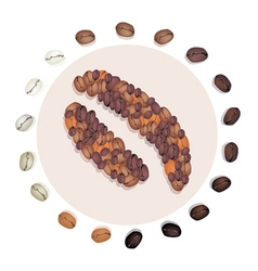 Different roasted coffee bean with civet coffee be vector