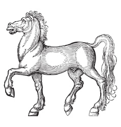 Horse engraving vector image vector image