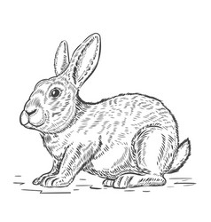 Rabbit isolated on white background design vector