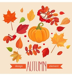 Color autumn leaves and pumpkin vector