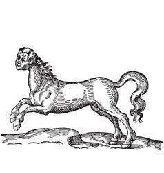 Human headed horse engraving vector image