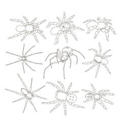 Spiders set vector
