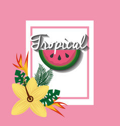 tropical watermelon fruit hibiscus and bird of vector image