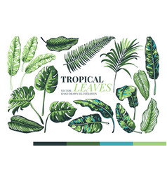 Tropical palm leaves and jungle leaves vector