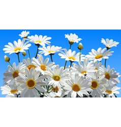 Daisy flowers on a blue background vector