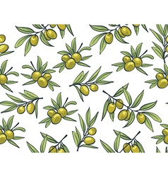 Yellow olives from branches on a white background vector