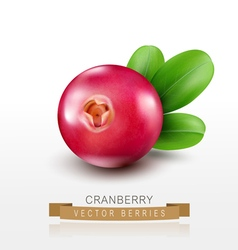 Isolated cranberries on a white background vector