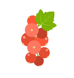 bunch of redcurrant vector image vector image