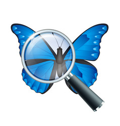 Magnifying glass and butterfly vector
