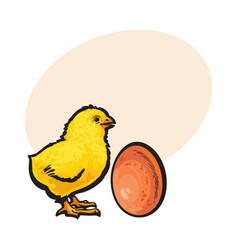 little newborn chicken and whole brown egg sketch vector image vector image