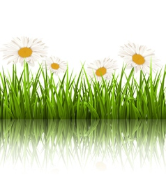 Green grass lawn with white chamomiles and vector