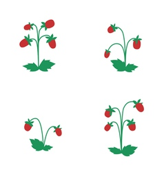 Wild strawberry bushes vector