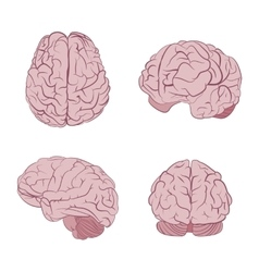 Human brain four views top frontal side three vector