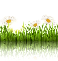 Green grass lawn with chamomiles and reflection on vector image
