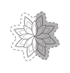 star anice flower decoration monochrome vector image