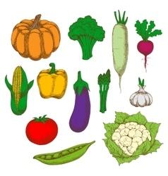 Healthy and dietary vegetables sketch symbols vector image vector image