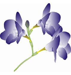 Purple freesia vector