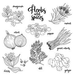 Spices and herbs set Contour on white vector image vector image