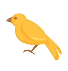 Canary bird isolated on white background vector