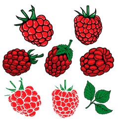 set of the raspberry on white background design vector image