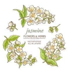 Jasmine vector