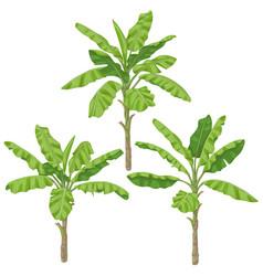 banana plants isolated vector image vector image