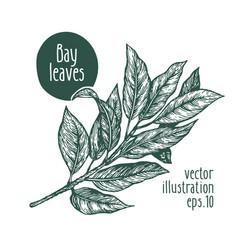 Bay leaves for design menu vector