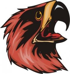 eagle predatory bird vector image vector image